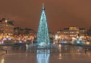 Christmas is here: The Trafalgar Square tree (Picture: Nigel Howard)